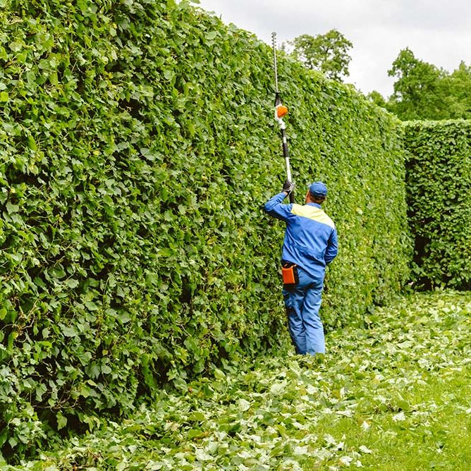 Man is cutting trees in the park. Professional gardener in a uniform cuts bushes with clippers. Pruning garden, hedge. Worker trimming and landscaping green bushes