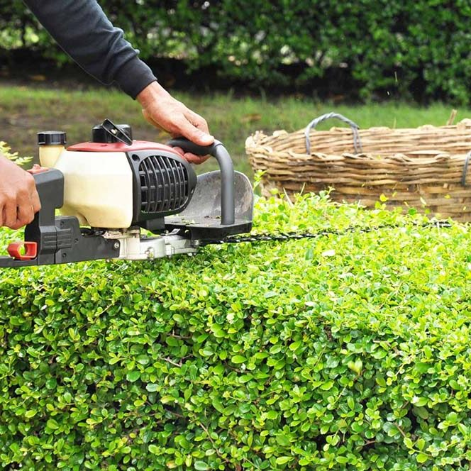 Small Hedge Cutting